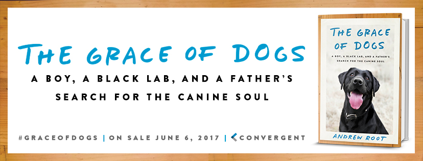 NEW: The Grace of Dogs